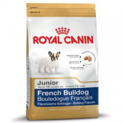 French Bulldog  Junior
